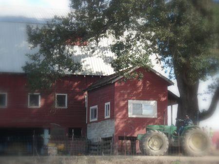 Pumpkin patch barn