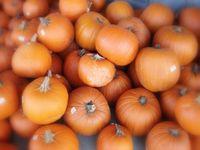 Qfc pumpkins
