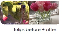 Tulips before.after